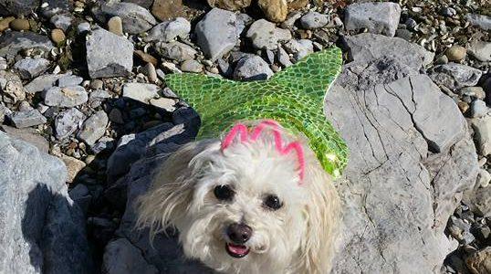 Miniature Mermaid – Love Like Lola